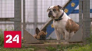 Какое наказание грозит владельцам опасных собак - Россия 24