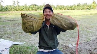 Trúng rắn khủng 16kg dính rắn cặp cái kết bất ngờ /san bat ben tre tv