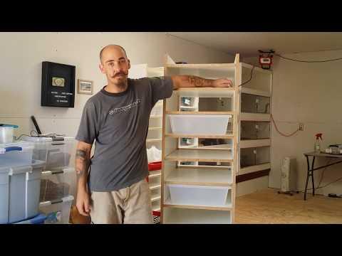 Building An Adult Ball Python Rack!!!