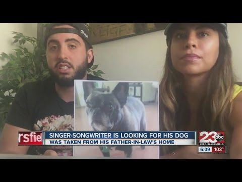 Popular singer-songwriter's dog goes missing in East Bakersfield