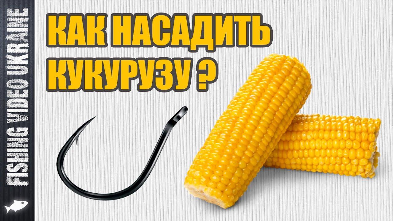 Как насадить кукурузу на крючок | Четыре способа | HD
