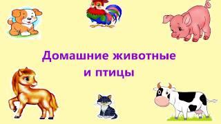 Домашние животные   Учим животных с детьми   Мультики для малышей   Развиваем малышей
