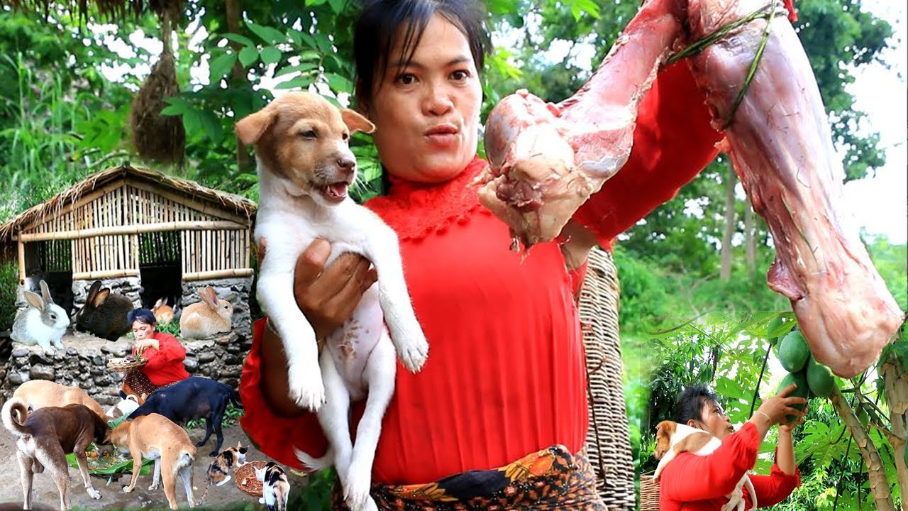 woman finding food met papaya & cow leg- soup cow leg for dog and cat- cooking in forest HD