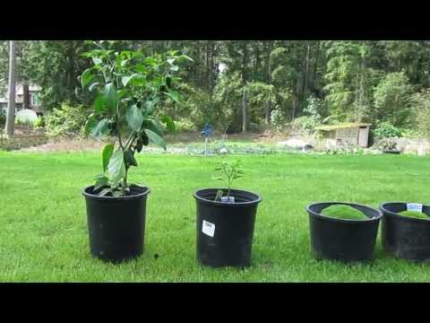 Miracle Grow Experiment: Benefits of Fertilizer - YouTube