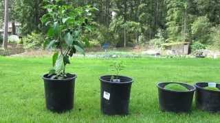 Miracle Grow Experiment Benefits of Fertilizer