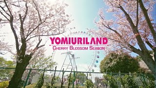 A Fun Cherry Blossom Spot in Tokyo 🌸 Spring Time at Yomiuriland