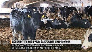 Дополнительный рубль за каждый литр молока
