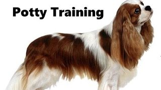 How To Potty Train A Cavalier King Charles Spaniel Puppy - Cavalier King Charles Spaniel Puppies