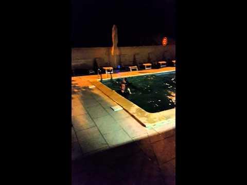 Tous à la piscine,