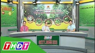 Chăm sóc vườn cây ăn trái mùa lũ | Tư vấn khuyến nông - 15/9/2018 | THDT