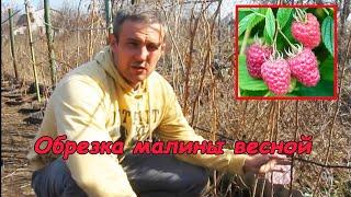 Обрезка малины весной #деломастерабоится