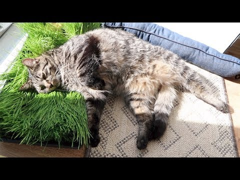 Boo Day 192 - Cat Grass Extravaganza - Wheatgrass For Cats