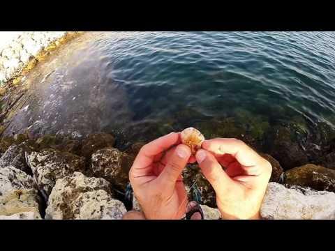 Fishing ( Lures VS Shrimps !!! )