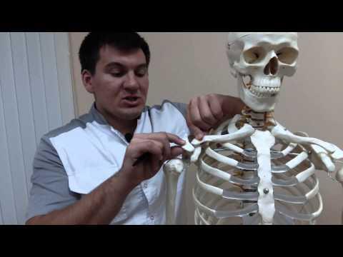 Плечелопаточный периартроз. Что происходит с суставом?