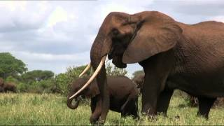 Elephants- undercover with The Thin Green Line Foundation