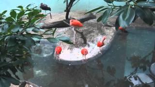 Zoológico do Bronx, Nova Iorque, janeiro de 2012