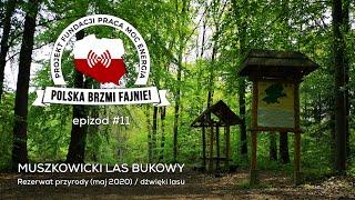 POLSKA BRZMI FAJNIE #11: Muszkowicki Las Bukowy (rezerwat przyrody)