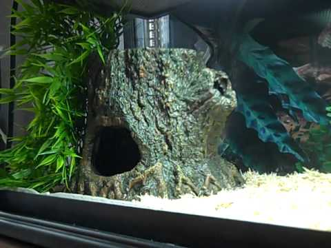 Corn Snake Tank Set Up Youtube