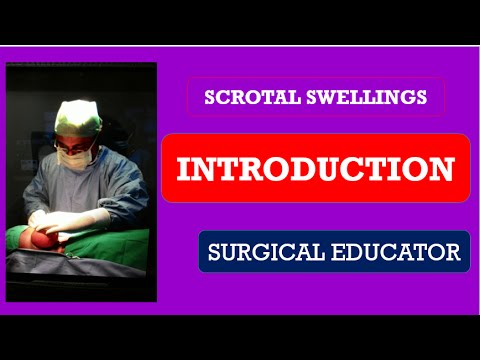 Download Scrotal Swellings  Introduction