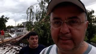 Chuva e vento forte causa queda de árvore na rua Inácio Mendes em Limoeiro do Norte no último domingo