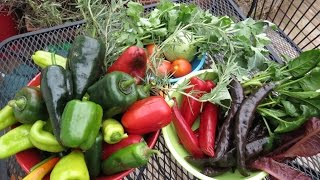 Fall Gardening: The Final Harvest, Cooking and Heating Costs 4 of 4 - TRG 2014