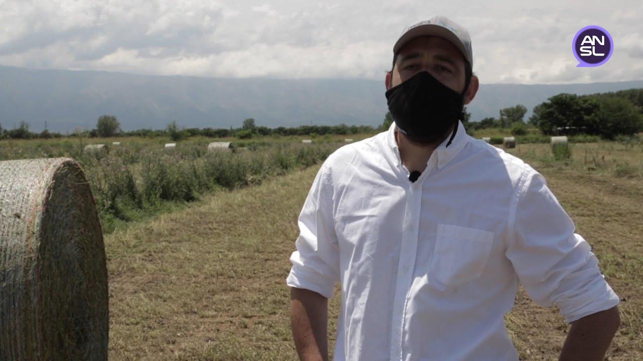 ALFAZAL: ofrecen maquinarias para la henificación y armado de los rollos de alfalfa a productores de