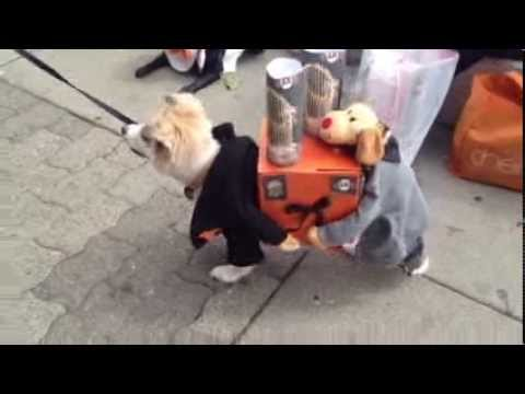 two dogs carrying present sf giants world series trophies - Large Dog Christmas Outfits