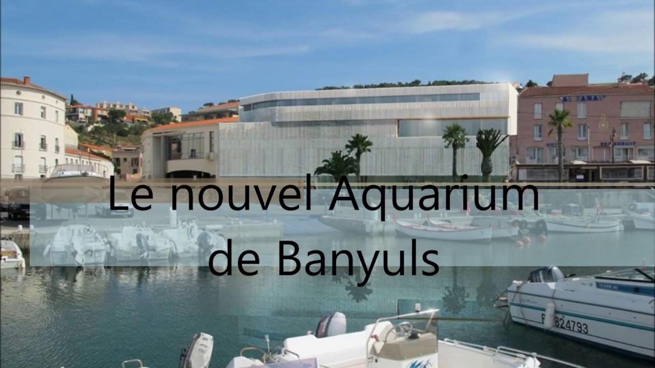 aquarium de banyuls sur mer bien plus qu un quot zoo 224 poissons quot