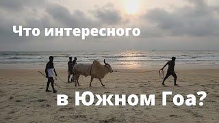 Индия Южный Гоа нелегальные бои быков русские девушки в индийском кино хороший отель и пляжи