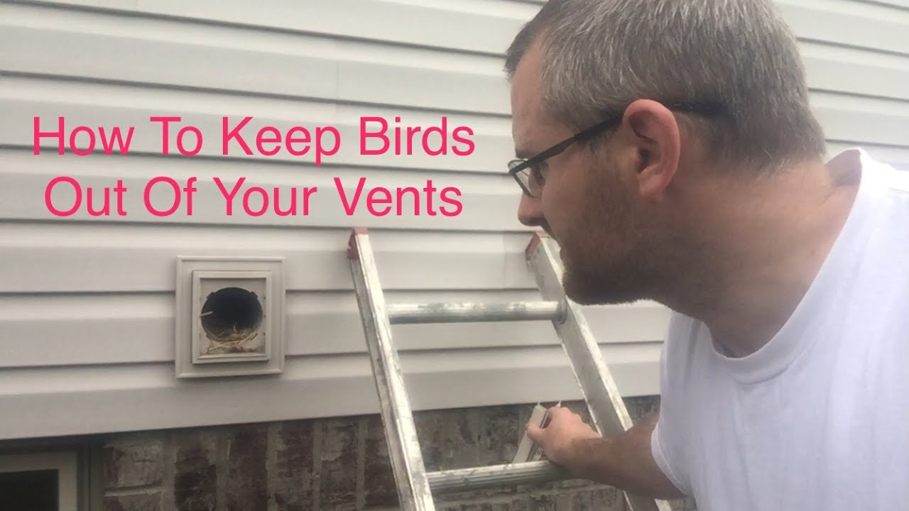 How To Keep Bird Out Of Your Vents Youtube