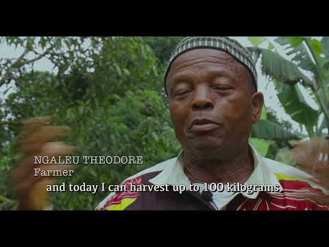 Cameroon: Agrotrade Project