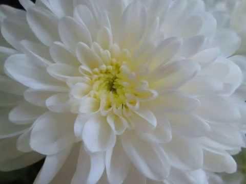 Einsturzende Neubauten - Blume