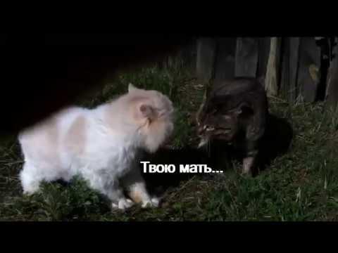 Коты ругаются матом на русском РЖАКА! ОСТОРОЖНО МАТЫ!!!!!!!