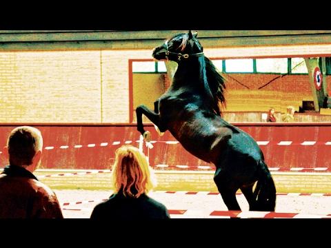 Hempfling - Meets Fighting PRE Stallion - Practical (Life-) Performance