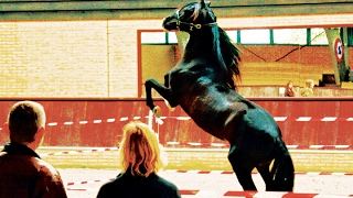 Hempfling  Meets Fighting PRE Stallion  Practical (Life) Performance
