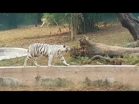 Delhi trip Zoo complete guide walkthrough and trip National zoo India white tiger unseen footage