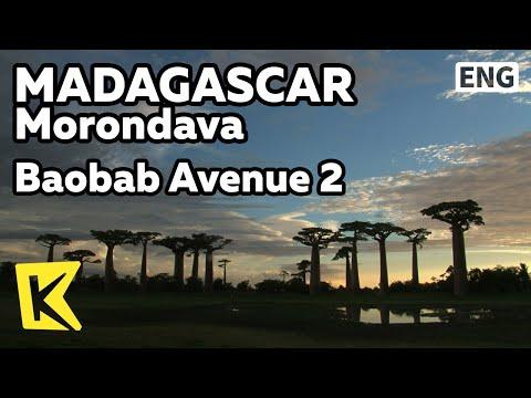 【K】Madagascar Travel-Morondava[마다가스카르 여행-모론다바]바오밥 나무 거리 2 석양, 일출/Baobab Avenue 2/Sunset/Sunrise