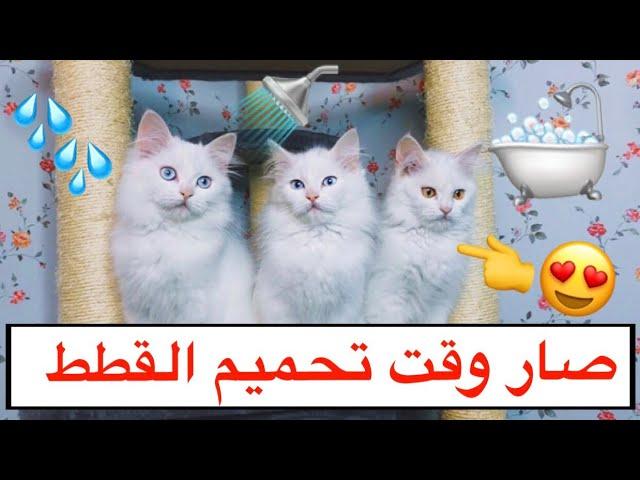 اول مره احمم القطط الصغار 😍 شوفوا ردة فعلهم 😂💔 ( تحميم القطط ) / Mohamed Vlog