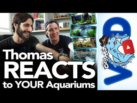 Thomas REACTS To YOUR Aquariums! | BigAlsPets.com