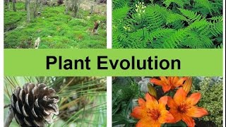 Plant Evolution (updated)