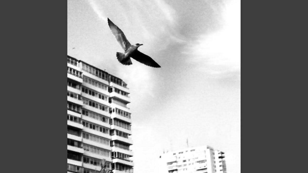 La Soucoupe Volante Et L'oiseau