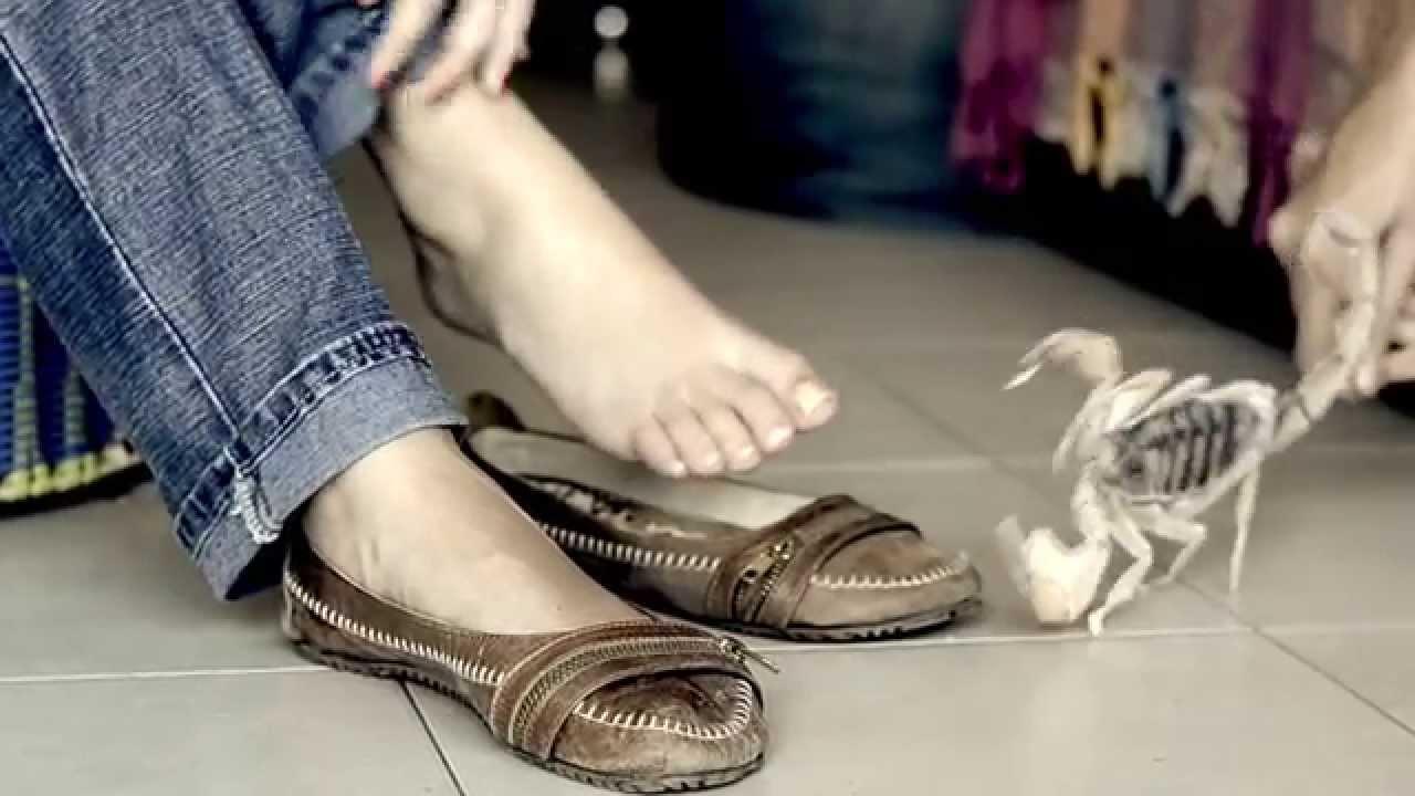 Un Video Muestra Las Diferencias Entre Alacranes Venenosos Y Los