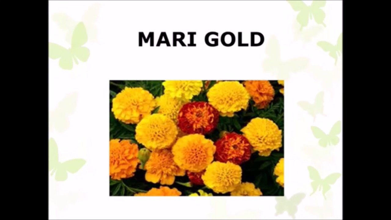 Learning common flower spellings - YouTube