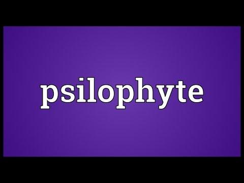 Psilophyte Meaning