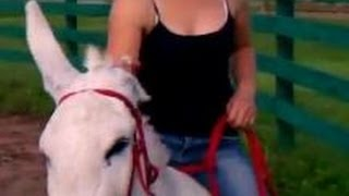Girl riding bareback donkey/horse