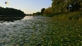 Придеснянские болота | Неизведанная Украина