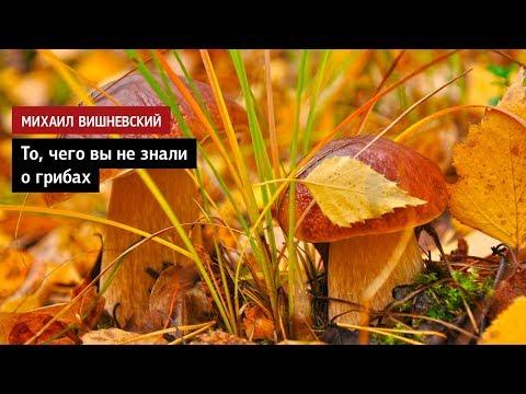Михаил Вишневский: То, чего вы не знали о грибах