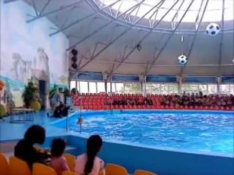 Дельфинарий «Немо» Ереван