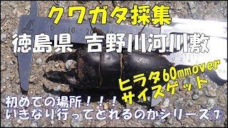 徳島県 吉野川河川敷のクワガタ攻略法 クワガタが集まってくる樹木は、...