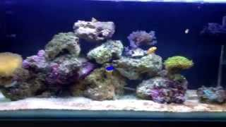 Fluval m90 first aquarium any comments:)
